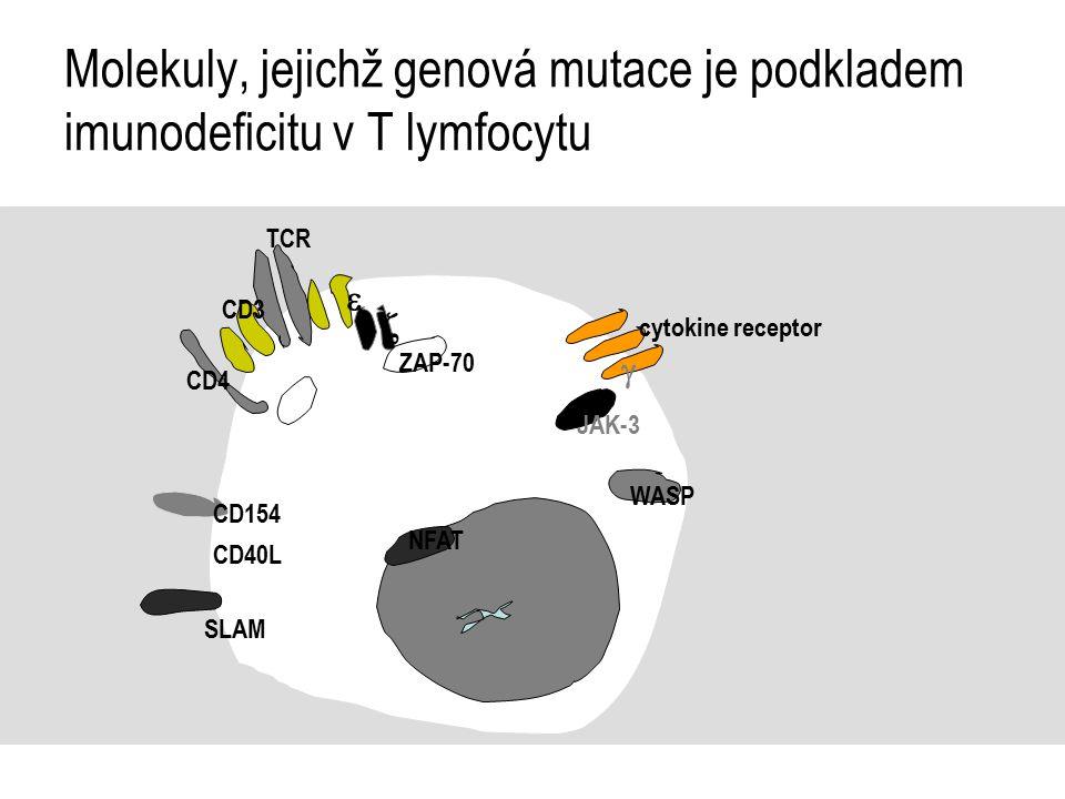 Molekuly, jejichž genová mutace je podkladem imunodeficitu v T lymfocytu TCR CD3   ZAP-70 cytokine receptor  JAK-3 WASP CD4 CD154 CD40L SLAM NFAT