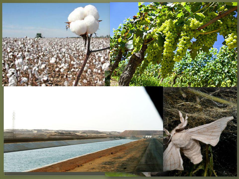  Obilí, bavlník, bourec morušový, víno, ovoce, zelenina  Důležité je zavlažování