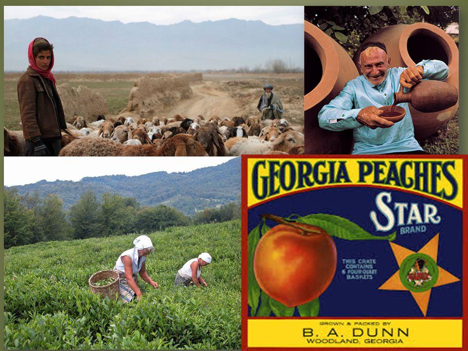  Ovoce, vinná réva, pšenice, ječme, bavlník, čajovník, chov skotu a ovcí  Průmysl chemický, potravinářský, textilní