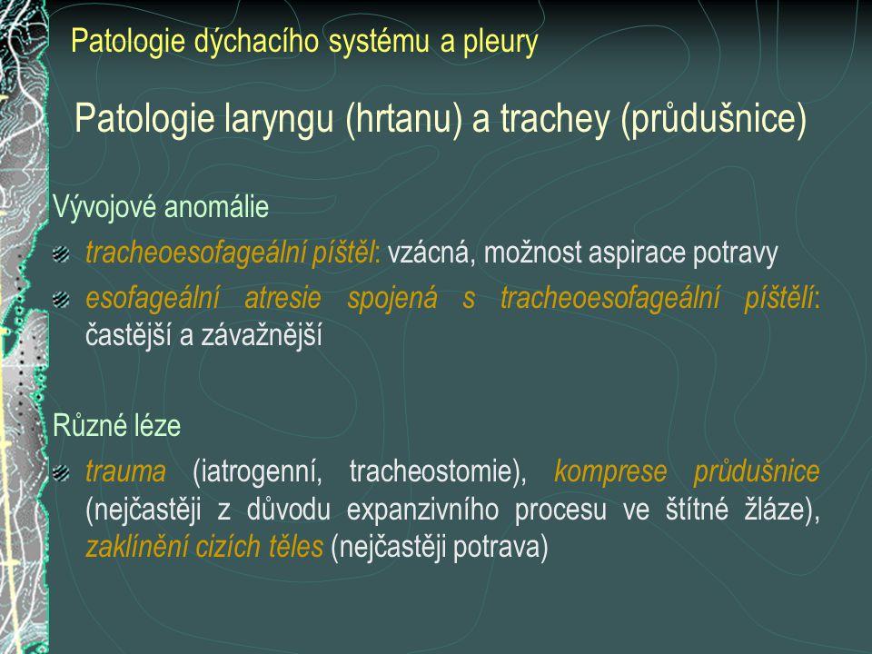 Adenokarcinom, papilární typ
