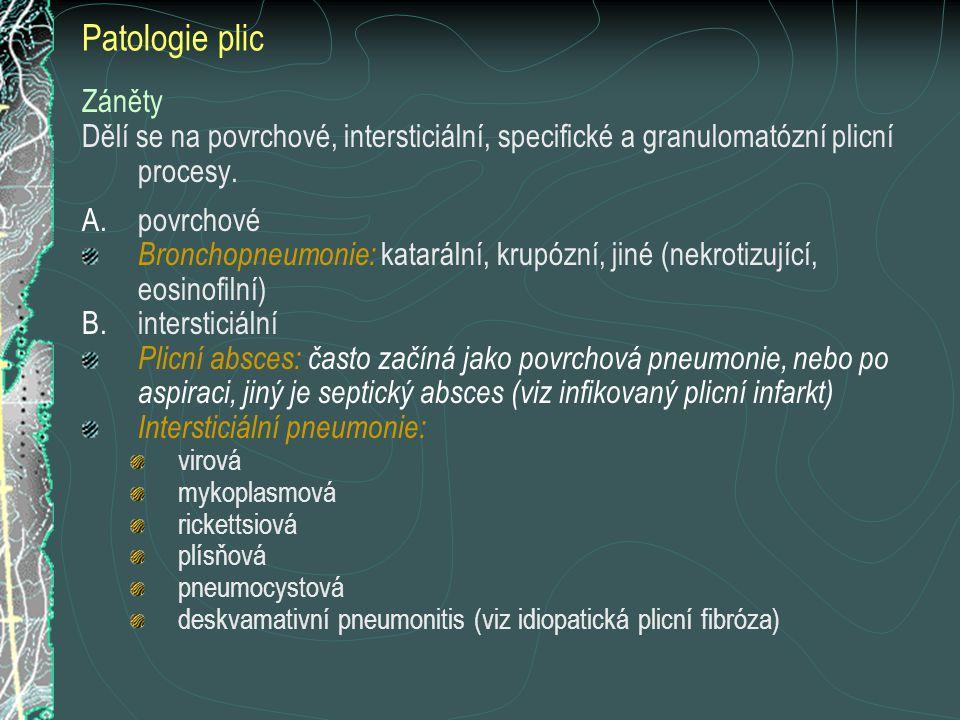 Patologie plic Záněty Dělí se na povrchové, intersticiální, specifické a granulomatózní plicní procesy. A.povrchové Bronchopneumonie: katarální, krupó