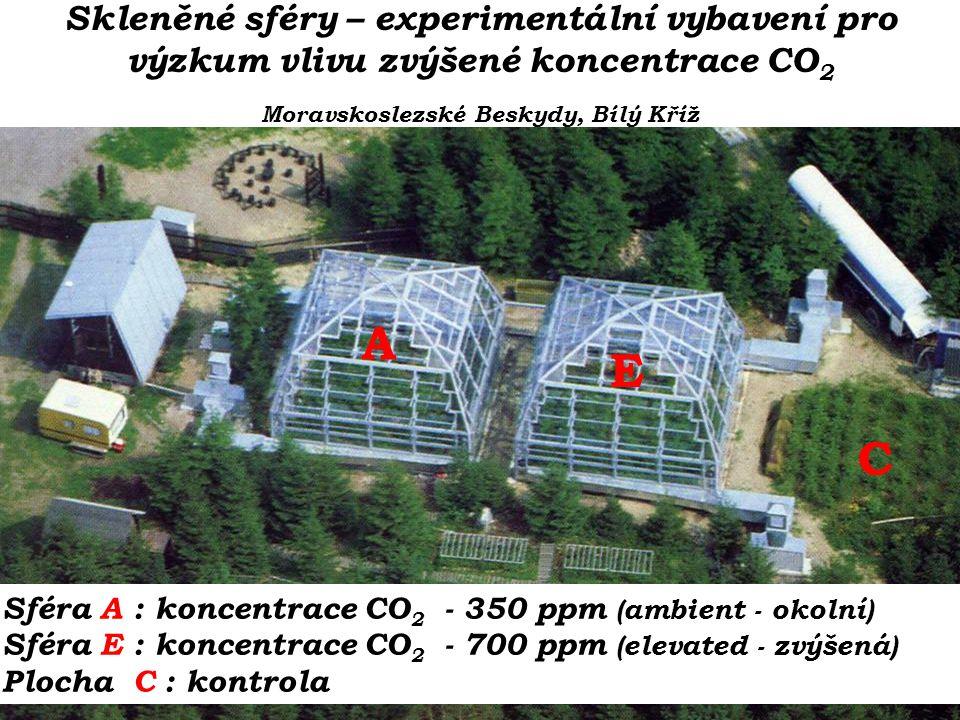 A C E Sféra A : koncentrace CO 2 - 350 ppm (ambient - okolní) Sféra E : koncentrace CO 2 - 700 ppm (elevated - zvýšená) Plocha C : kontrola Skleněné sféry – experimentální vybavení pro výzkum vlivu zvýšené koncentrace CO 2 Moravskoslezské Beskydy, Bílý Kříž