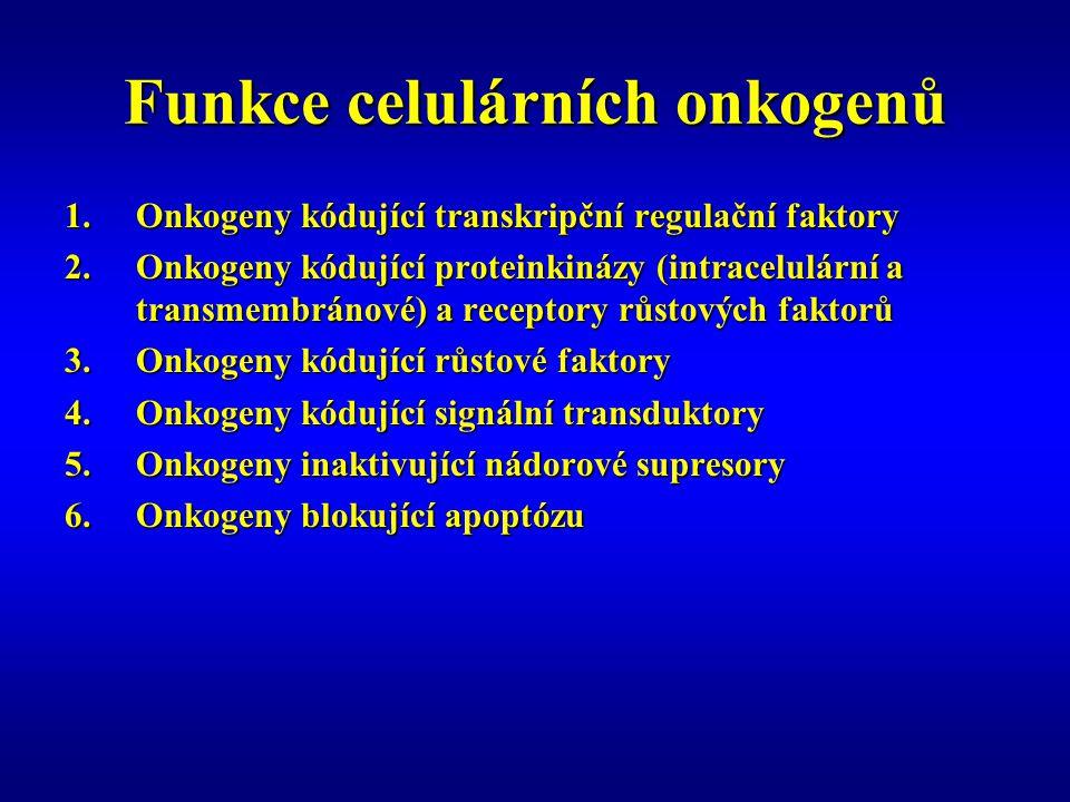 Funkce celulárních onkogenů 1.Onkogeny kódující transkripční regulační faktory 2.Onkogeny kódující proteinkinázy (intracelulární a transmembránové) a receptory růstových faktorů 3.Onkogeny kódující růstové faktory 4.Onkogeny kódující signální transduktory 5.Onkogeny inaktivující nádorové supresory 6.Onkogeny blokující apoptózu