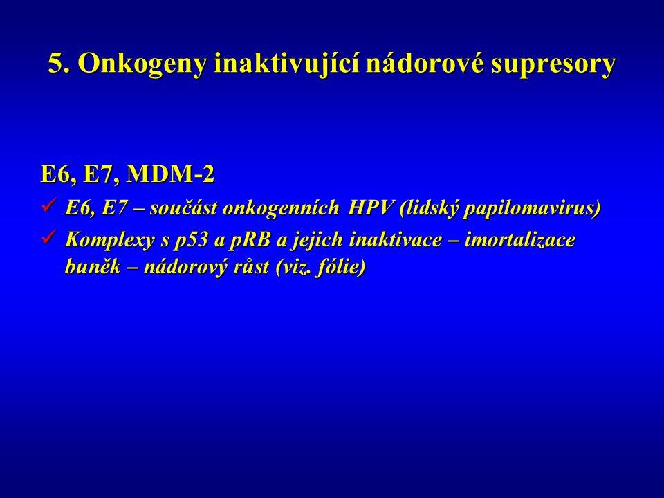 5. Onkogeny inaktivující nádorové supresory E6, E7, MDM-2 E6, E7 – součást onkogenních HPV (lidský papilomavirus) E6, E7 – součást onkogenních HPV (li