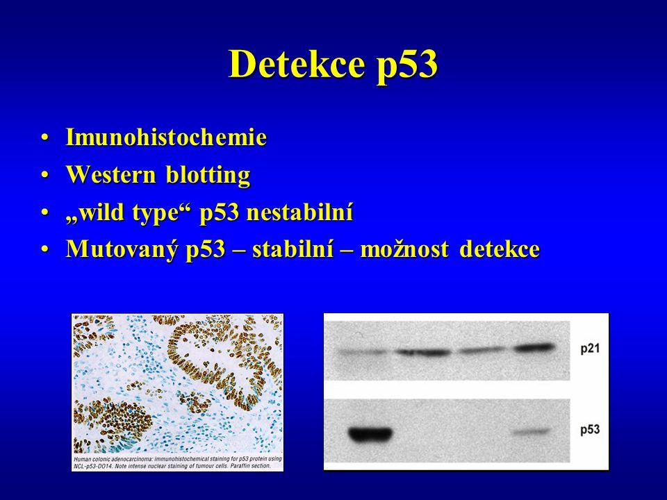 "Detekce p53 ImunohistochemieImunohistochemie Western blottingWestern blotting ""wild type p53 nestabilní""wild type p53 nestabilní Mutovaný p53 – stabilní – možnost detekceMutovaný p53 – stabilní – možnost detekce"