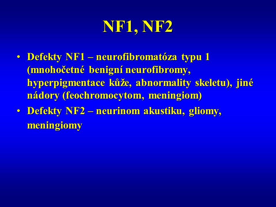 NF1, NF2 Defekty NF1 – neurofibromatóza typu 1 (mnohočetné benigní neurofibromy, hyperpigmentace kůže, abnormality skeletu), jiné nádory (feochromocytom, meningiom)Defekty NF1 – neurofibromatóza typu 1 (mnohočetné benigní neurofibromy, hyperpigmentace kůže, abnormality skeletu), jiné nádory (feochromocytom, meningiom) Defekty NF2 – neurinom akustiku, gliomy, meningiomyDefekty NF2 – neurinom akustiku, gliomy, meningiomy
