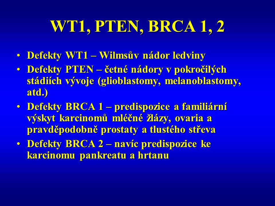 WT1, PTEN, BRCA 1, 2 Defekty WT1 – Wilmsův nádor ledvinyDefekty WT1 – Wilmsův nádor ledviny Defekty PTEN – četné nádory v pokročilých stádiích vývoje (glioblastomy, melanoblastomy, atd.)Defekty PTEN – četné nádory v pokročilých stádiích vývoje (glioblastomy, melanoblastomy, atd.) Defekty BRCA 1 – predispozice a familiární výskyt karcinomů mléčné žlázy, ovaria a pravděpodobně prostaty a tlustého střevaDefekty BRCA 1 – predispozice a familiární výskyt karcinomů mléčné žlázy, ovaria a pravděpodobně prostaty a tlustého střeva Defekty BRCA 2 – navíc predispozice ke karcinomu pankreatu a hrtanuDefekty BRCA 2 – navíc predispozice ke karcinomu pankreatu a hrtanu