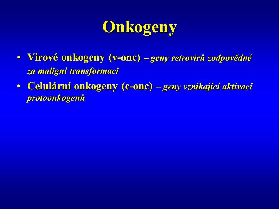 Onkogeny Virové onkogeny (v-onc) – geny retrovirů zodpovědné za maligní transformaciVirové onkogeny (v-onc) – geny retrovirů zodpovědné za maligní transformaci Celulární onkogeny (c-onc) – geny vznikající aktivací protoonkogenůCelulární onkogeny (c-onc) – geny vznikající aktivací protoonkogenů