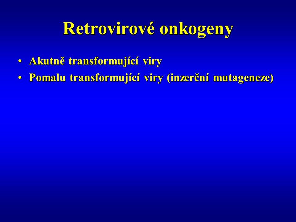 Retrovirové onkogeny Akutně transformující viryAkutně transformující viry Pomalu transformující viry (inzerční mutageneze)Pomalu transformující viry (inzerční mutageneze)