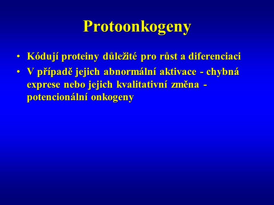pRB Nefosforylovaná forma pRB – aktivní – blokuje přestup z G1 do S fázeNefosforylovaná forma pRB – aktivní – blokuje přestup z G1 do S fáze Fosforylovaná nebo hyperfosforylovaná forma pRB – neaktivní – proliferaceFosforylovaná nebo hyperfosforylovaná forma pRB – neaktivní – proliferace Retinoblastom – maligní nádor retinyRetinoblastom – maligní nádor retiny Obě alely pRB mutovány nebo deletoványObě alely pRB mutovány nebo deletovány 1/3 případů – vrozený defekt jedné alely – k rozvoji nádoru nutný defekt druhé alely (LOH)1/3 případů – vrozený defekt jedné alely – k rozvoji nádoru nutný defekt druhé alely (LOH)