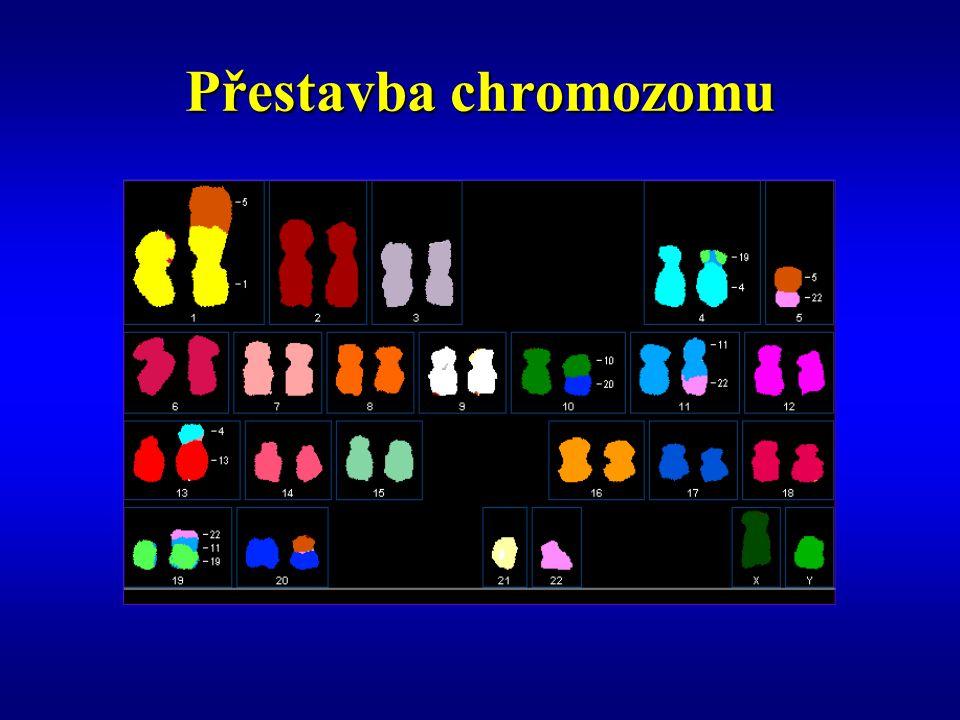 Přehled a lokalizace onkogenů a nádory suprimujících genů (převzato z R.