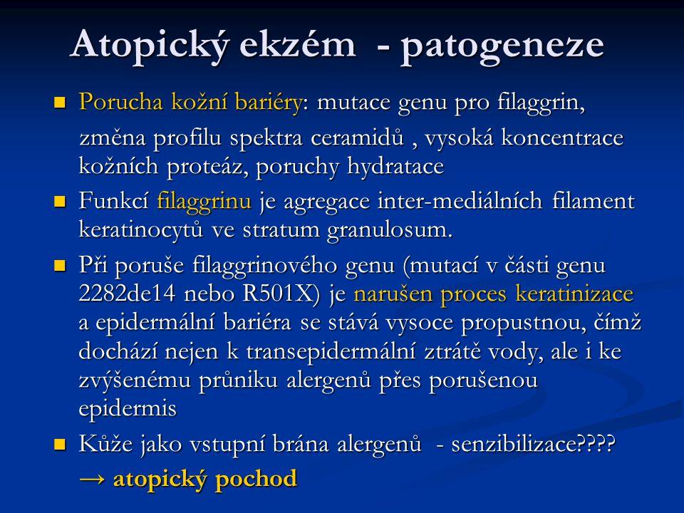 Atopický ekzém - patogeneze Porucha kožní bariéry: mutace genu pro filaggrin, Porucha kožní bariéry: mutace genu pro filaggrin, změna profilu spektra