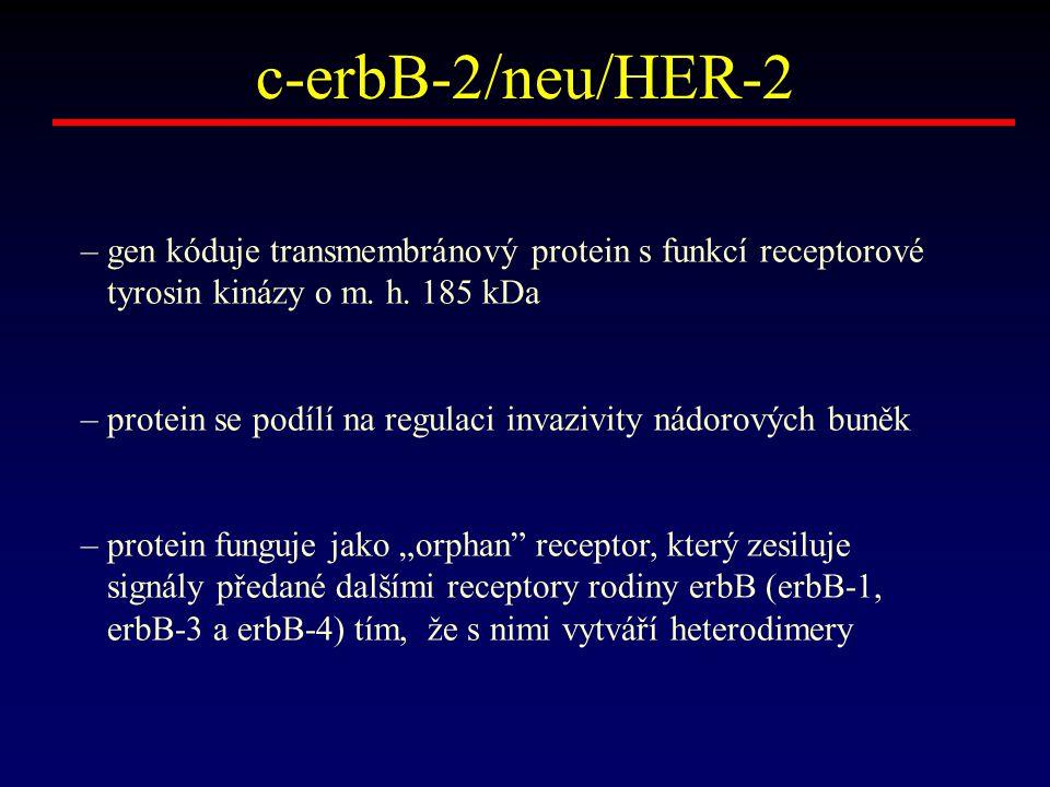 c-erbB-2/neu/HER-2 – gen kóduje transmembránový protein s funkcí receptorové tyrosin kinázy o m. h. 185 kDa – protein se podílí na regulaci invazivity