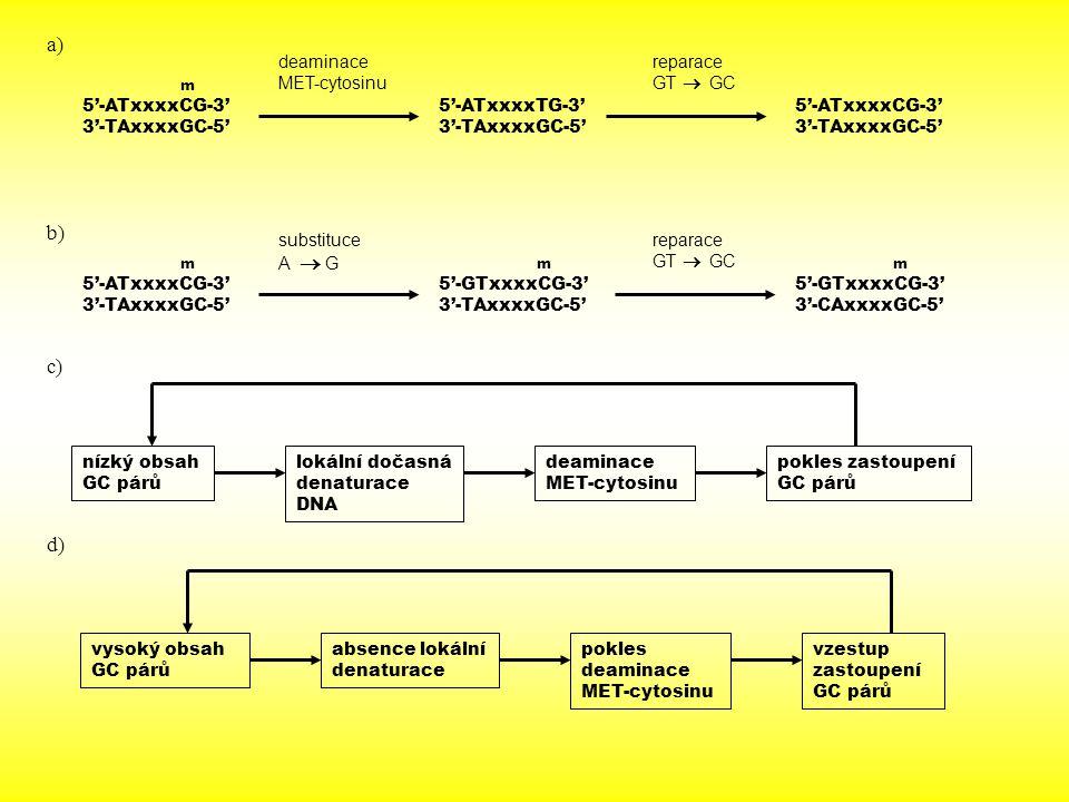 nízký obsah GC párů lokální dočasná denaturace DNA 5'-ATxxxxCG-3' 3'-TAxxxxGC-5' deaminace MET-cytosinu 5'-ATxxxxTG-3' 3'-TAxxxxGC-5' reparace GT  GC