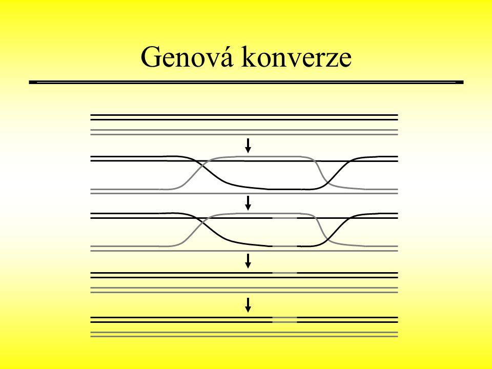 Genová konverze
