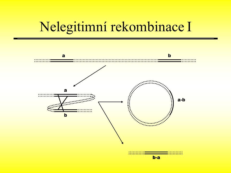 ab a b b-a a-b b-a Nelegitimní rekombinace I
