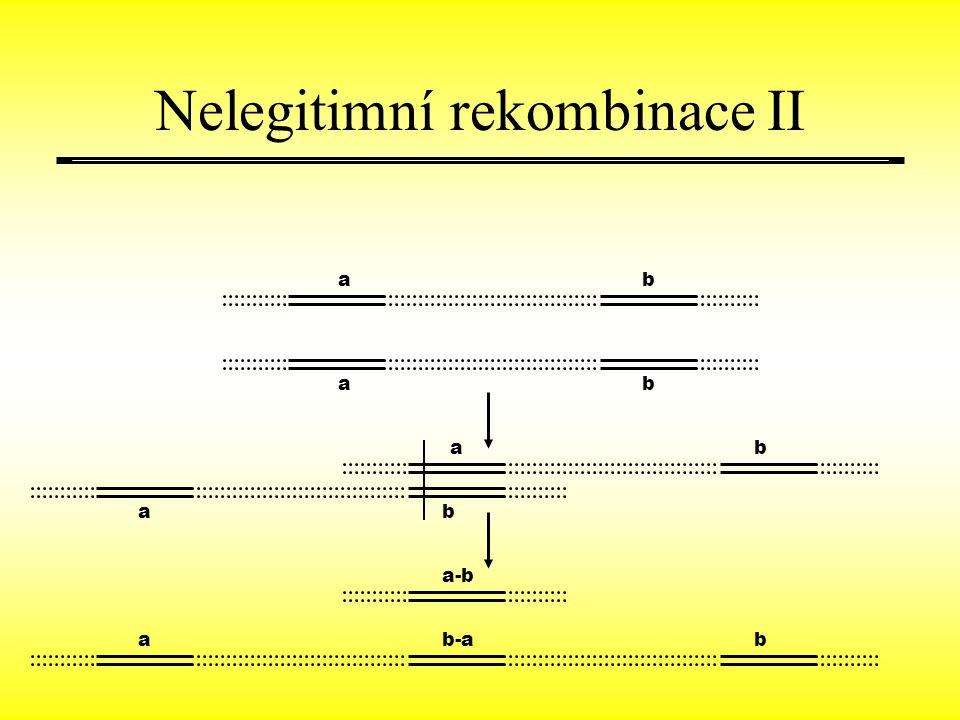 ab ab ab ab a a-b b-ab Nelegitimní rekombinace II