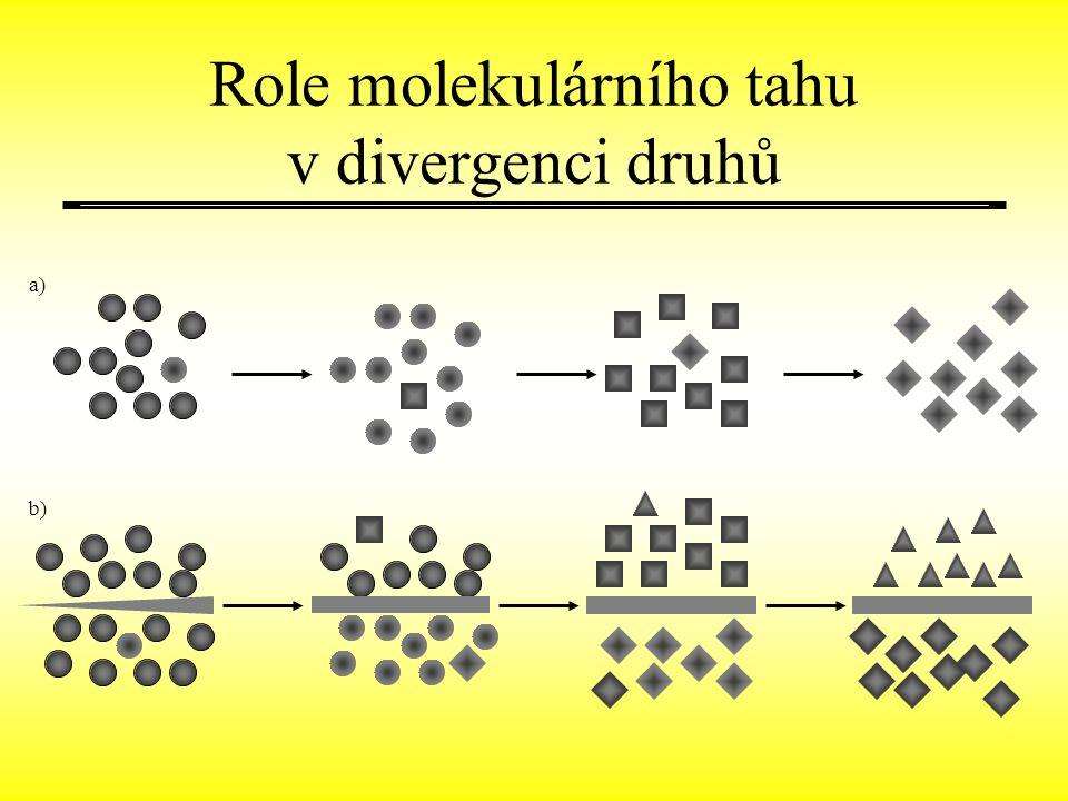 a)a) b) Role molekulárního tahu v divergenci druhů