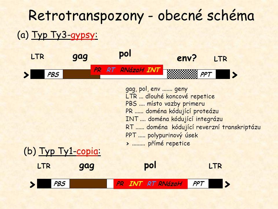 gag, pol, env....... geny LTR... dlouhé koncové repetice PBS.... místo vazby primeru PR...... doména kódující proteázu INT.... doména kódující integrá