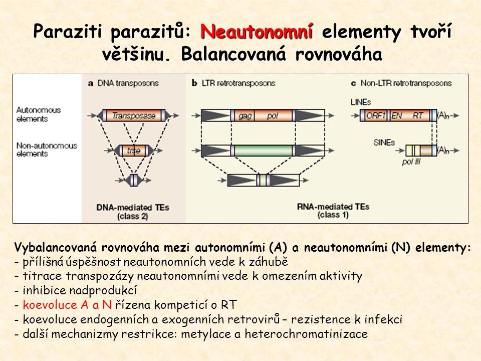 Paraziti parazitů: Neautonomní elementy tvoří většinu.