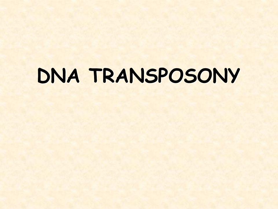 DNA TRANSPOSONY
