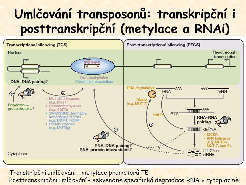 Umlčování transposonů: transkripční i posttranskripční (metylace a RNAi) Transkripční umlčování – metylace promotorů TE Posttranskripční umlčování – sekvenčně specifická degradace RNA v cytoplazmě