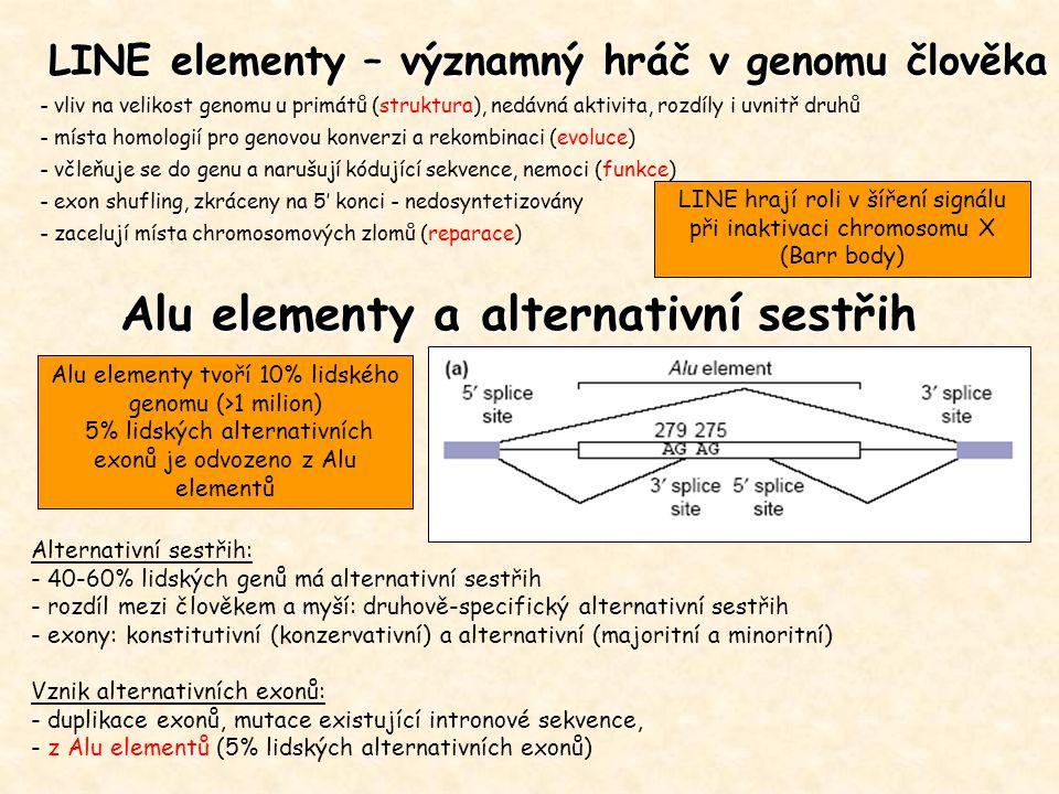 LINE elementy – významný hráč v genomu člověka - vliv na velikost genomu u primátů (struktura), nedávná aktivita, rozdíly i uvnitř druhů - místa homologií pro genovou konverzi a rekombinaci (evoluce) - včleňuje se do genu a narušují kódující sekvence, nemoci (funkce) - exon shufling, zkráceny na 5' konci - nedosyntetizovány - zacelují místa chromosomových zlomů (reparace) Alternativní sestřih: - 40-60% lidských genů má alternativní sestřih - rozdíl mezi člověkem a myší: druhově-specifický alternativní sestřih - exony: konstitutivní (konzervativní) a alternativní (majoritní a minoritní) Vznik alternativních exonů: - duplikace exonů, mutace existující intronové sekvence, - z Alu elementů (5% lidských alternativních exonů) Alu elementy a alternativní sestřih Alu elementy tvoří 10% lidského genomu (>1 milion) 5% lidských alternativních exonů je odvozeno z Alu elementů LINE hrají roli v šíření signálu při inaktivaci chromosomu X (Barr body)