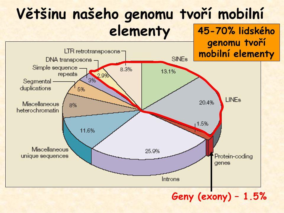 Většinu našeho genomu tvoří mobilní elementy Geny (exony) – 1.5% 45-70% lidského genomu tvoří mobilní elementy