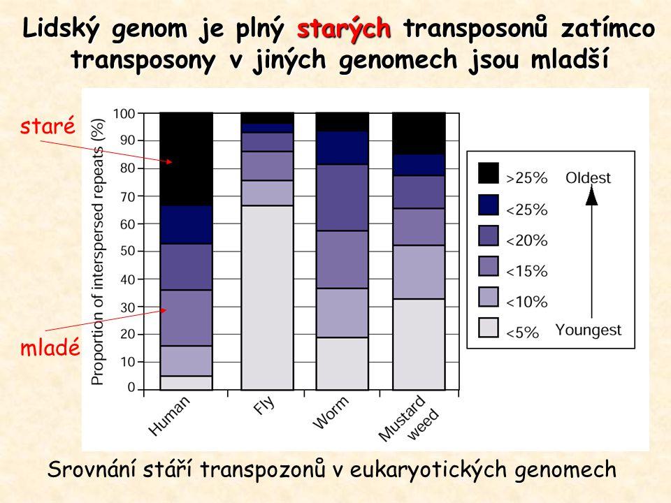 Srovnání stáří transpozonů v eukaryotických genomech Lidský genom je plný starých transposonů zatímco transposony v jiných genomech jsou mladší staré mladé