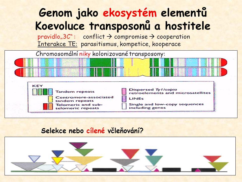 """Genom jako ekosystém elementů Koevoluce transposonů a hostitele pravidlo""""3C : conflict  compromise  cooperation Interakce TE: parasitismus, kompetice, kooperace Chromosomální niky kolonizované transposony: Selekce nebo cílené včleňování?"""