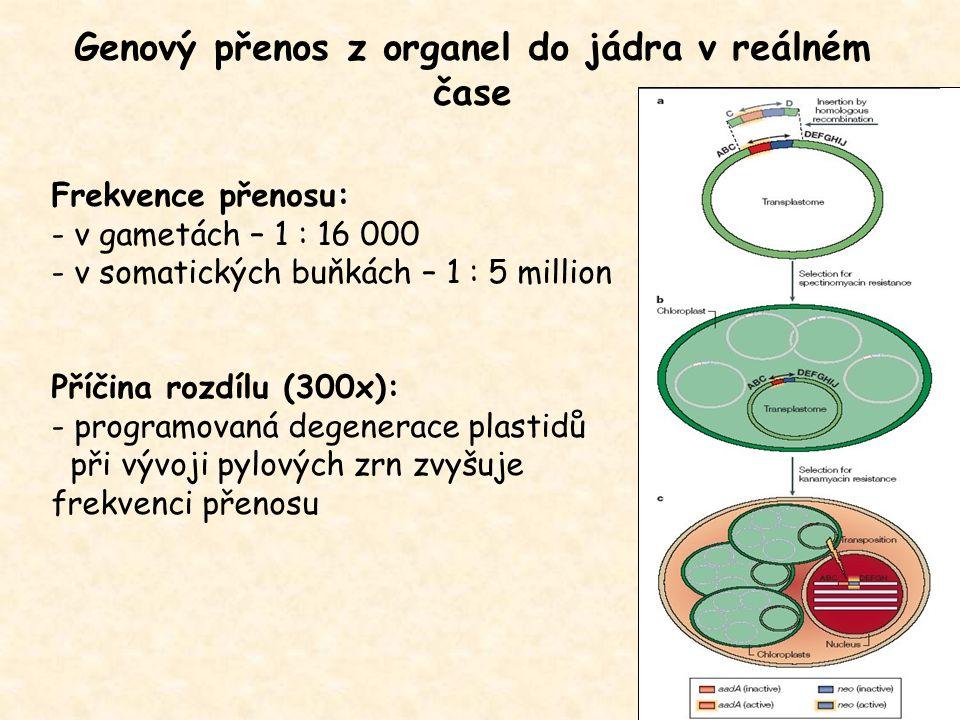 Genový přenos z organel do jádra v reálném čase Frekvence přenosu: - v gametách – 1 : 16 000 - v somatických buňkách – 1 : 5 million Příčina rozdílu (300x): - programovaná degenerace plastidů při vývoji pylových zrn zvyšuje frekvenci přenosu