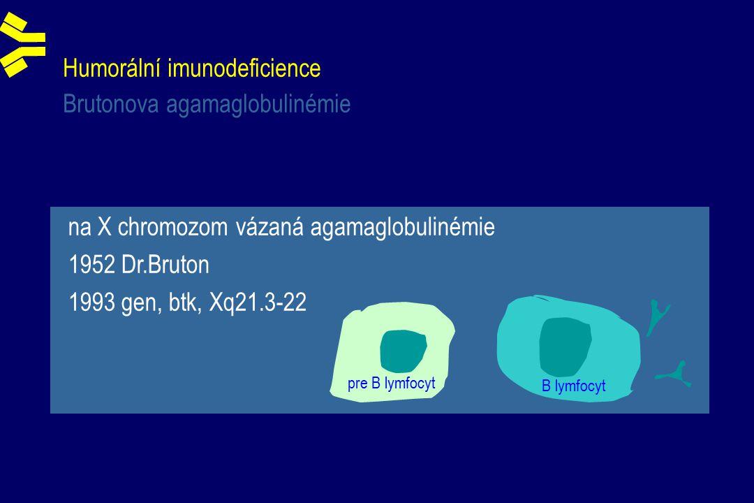 Humorální imunodeficience Brutonova agamaglobulinémie B lymfocyt pre B lymfocyt na X chromozom vázaná agamaglobulinémie 1952 Dr.Bruton 1993 gen, btk, Xq21.3-22