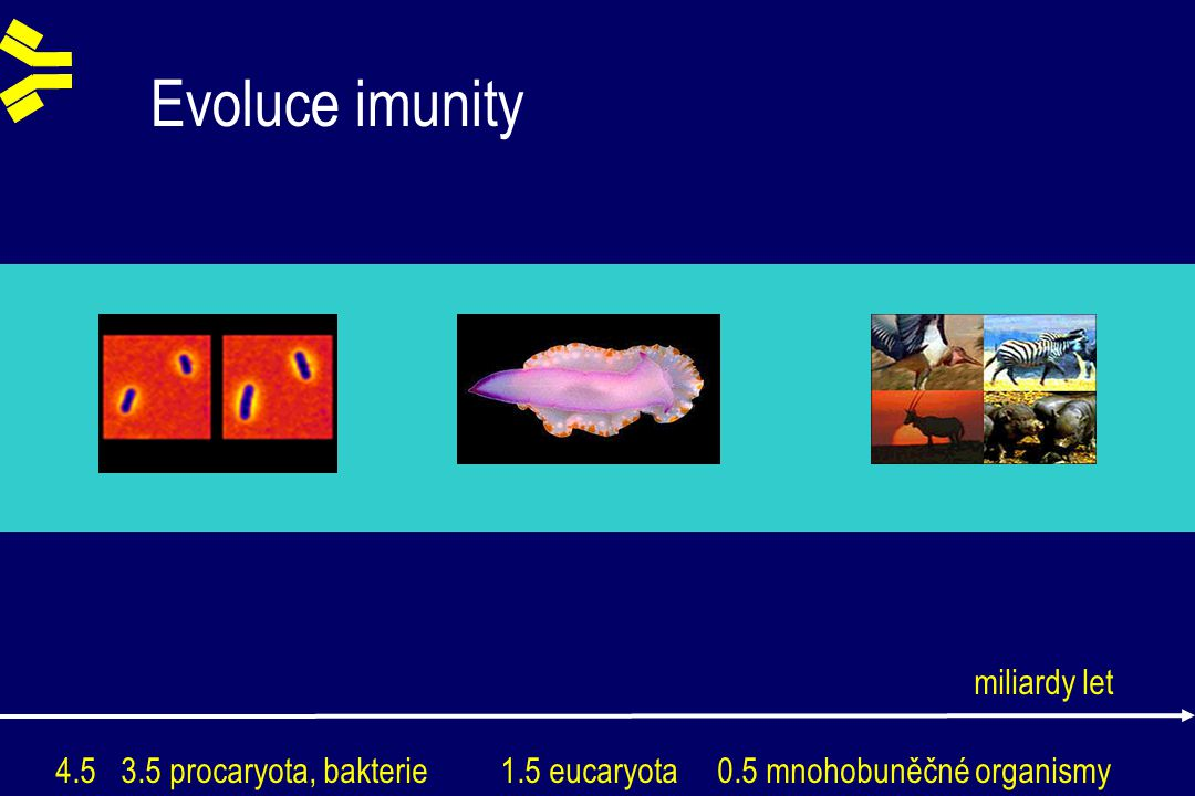 Evoluce imunity 4.5 3.5 procaryota, bakterie 1.5 eucaryota 0.5 mnohobuněčné organismy miliardy let
