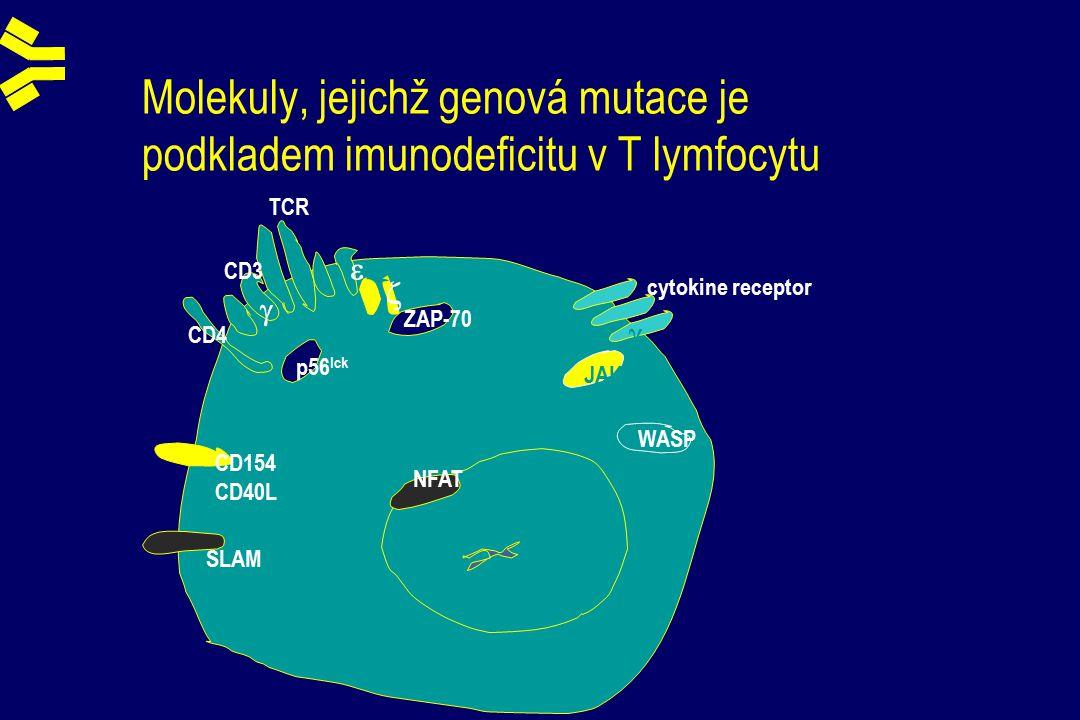 Molekuly, jejichž genová mutace je podkladem imunodeficitu v T lymfocytu TCR CD3    ZAP-70 cytokine receptor  JAK-3 WASP p56 lck CD4 CD154 CD40L SLAM NFAT
