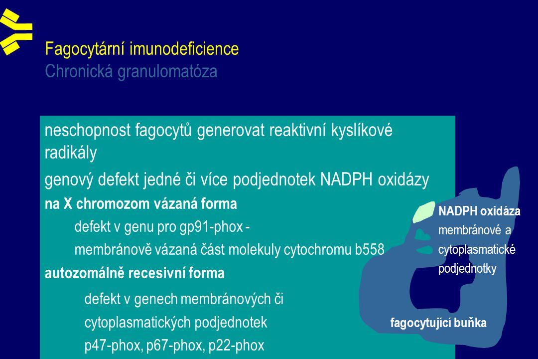 Fagocytární imunodeficience Chronická granulomatóza neschopnost fagocytů generovat reaktivní kyslíkové radikály genový defekt jedné či více podjednotek NADPH oxidázy na X chromozom vázaná forma defekt v genu pro gp91-phox - membránově vázaná část molekuly cytochromu b558 autozomálně recesivní forma defekt v genech membránových či cytoplasmatických podjednotek p47-phox, p67-phox, p22-phox fagocytující buňka NADPH oxidáza membránové a cytoplasmatické podjednotky