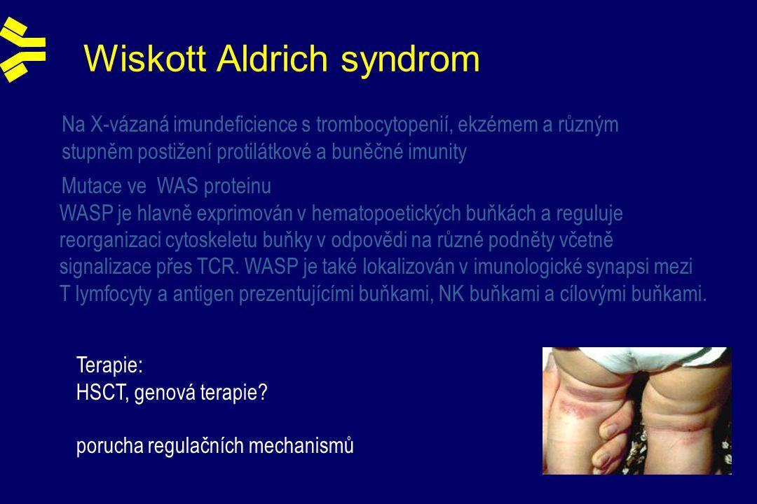 Wiskott Aldrich syndrom Na X-vázaná imundeficience s trombocytopenií, ekzémem a různým stupněm postižení protilátkové a buněčné imunity Mutace ve WAS proteinu WASP je hlavně exprimován v hematopoetických buňkách a reguluje reorganizaci cytoskeletu buňky v odpovědi na různé podněty včetně signalizace přes TCR.