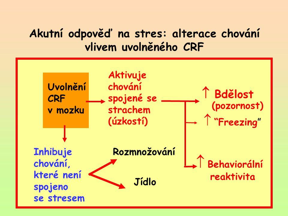 Akutní odpověď na stres: alterace chování vlivem uvolněného CRF Uvolnění CRF v mozku Aktivuje chování spojené se strachem (úzkostí)  Bdělost (pozorno