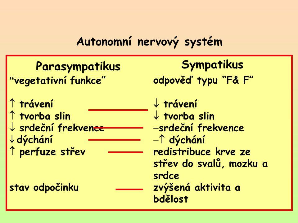 """Autonomní nervový systém Parasympatikus Sympatikus """" vegetativní funkce""""  trávení  tvorba slin  srdeční frekvence  dýchání  perfuze střev stav od"""