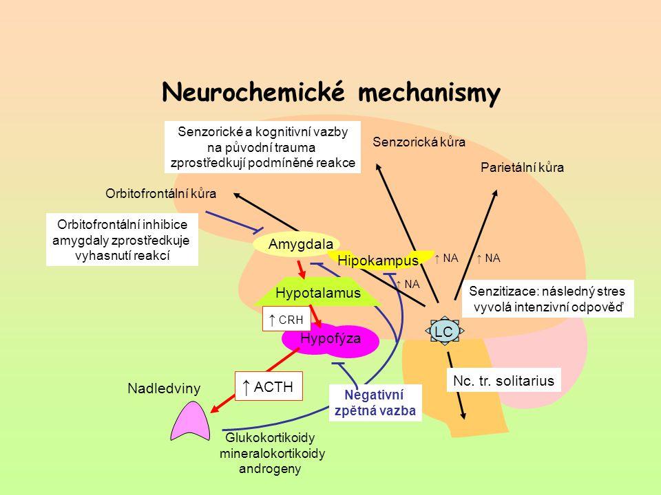 Glukokortikoidy mineralokortikoidy androgeny Neurochemické mechanismy LC Nc. tr. solitarius Hipokampus Amygdala Hypofýza Senzorické a kognitivní vazby