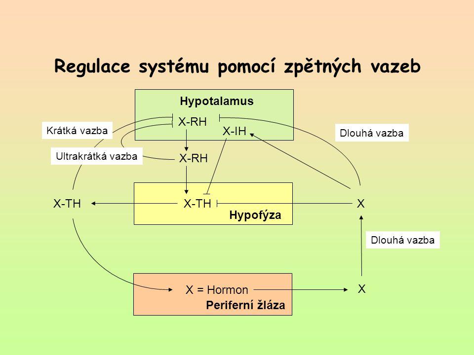 Regulace systému pomocí zpětných vazeb Hypotalamus X-RH X-IH X-RH X-TH Hypofýza Periferní žláza X = Hormon X XX-TH Ultrakrátká vazba Krátká vazba Dlou