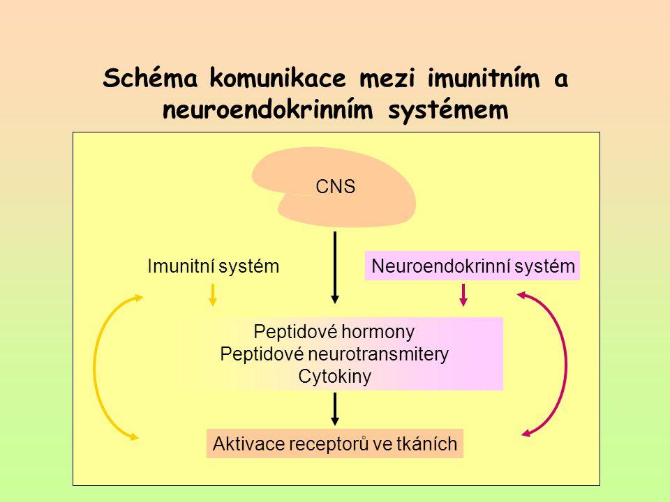 Schéma komunikace mezi imunitním a neuroendokrinním systémem Peptidové hormony Peptidové neurotransmitery Cytokiny Aktivace receptorů ve tkáních Neuro
