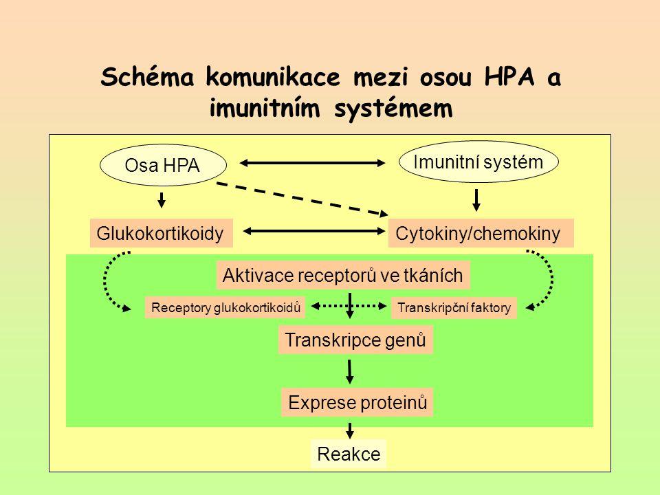 Schéma komunikace mezi osou HPA a imunitním systémem Reakce Aktivace receptorů ve tkáních Exprese proteinů Transkripce genů Receptory glukokortikoidů