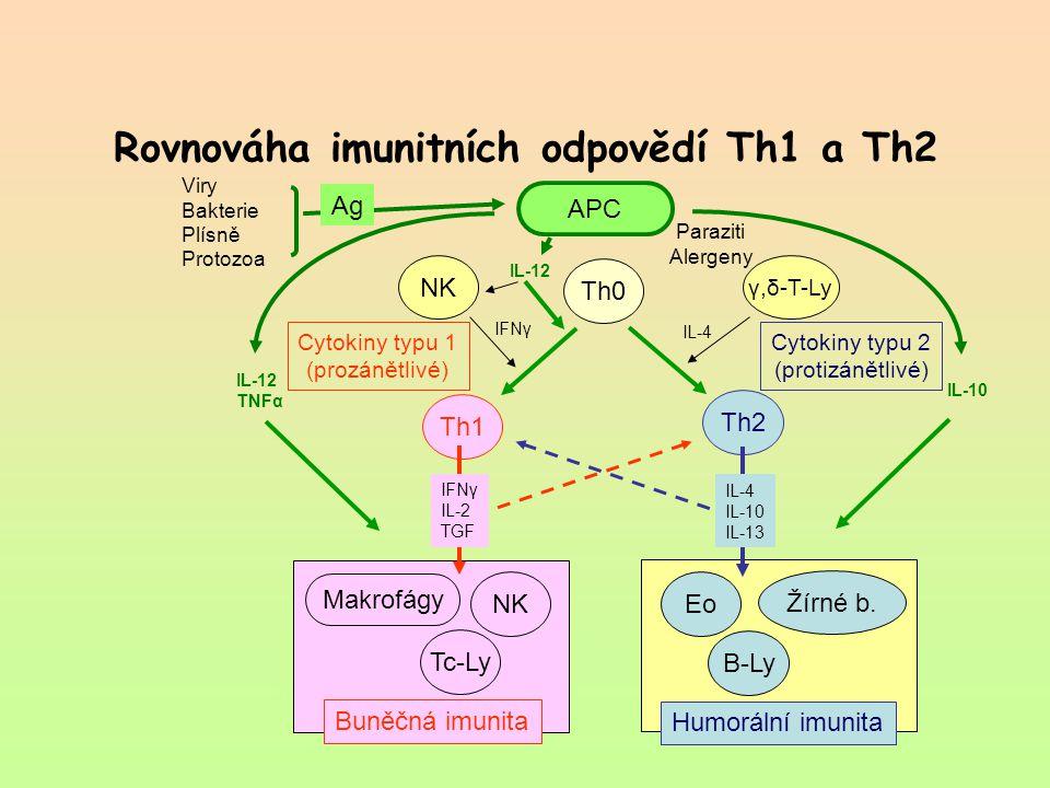 Rovnováha imunitních odpovědí Th1 a Th2 Th1 Th2 Th0 NK γ,δ-T-Ly Tc-Ly B-Ly NK Makrofágy Buněčná imunita Eo Žírné b. Humorální imunita APC Viry Bakteri