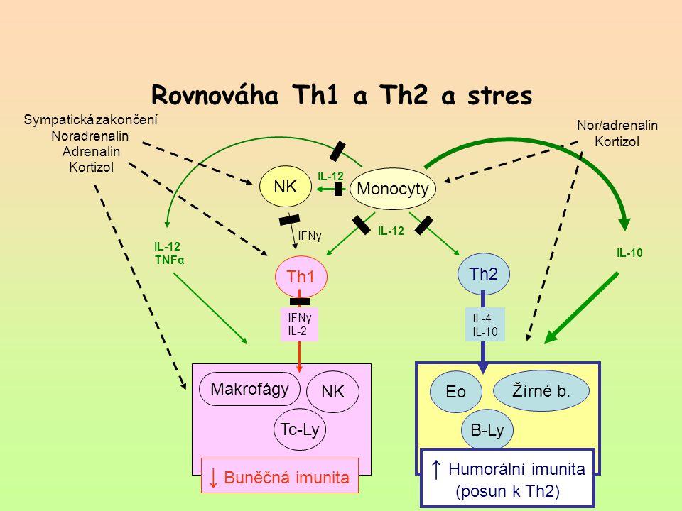 Rovnováha Th1 a Th2 a stres Th1 Th2 Monocyty NK Tc-Ly B-Ly NK Makrofágy ↓ Buněčná imunita Eo Žírné b. Sympatická zakončení Noradrenalin Adrenalin Kort