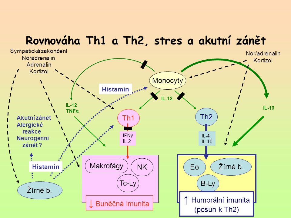 Rovnováha Th1 a Th2, stres a akutní zánět Th1 Th2 Monocyty Žírné b. Tc-Ly B-Ly NK Makrofágy ↓ Buněčná imunita Eo Žírné b. Sympatická zakončení Noradre