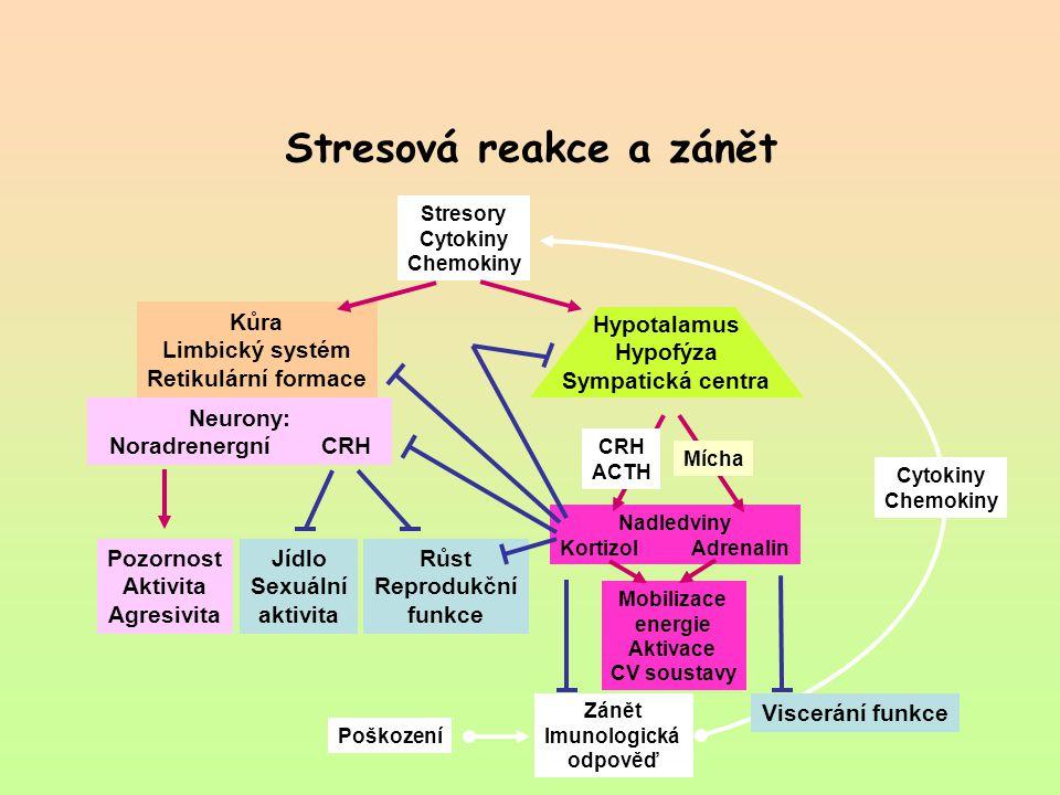 Stresová reakce a zánět Hypotalamus Hypofýza Sympatická centra Mobilizace energie Aktivace CV soustavy Nadledviny Kortizol Adrenalin Zánět Imunologick