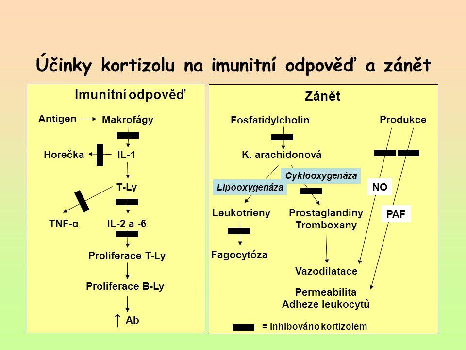 Účinky kortizolu na imunitní odpověď a zánět Imunitní odpověď Zánět Makrofágy Antigen IL-1 Horečka T-Ly IL-2 a -6 TNF-α Proliferace T-Ly Proliferace B