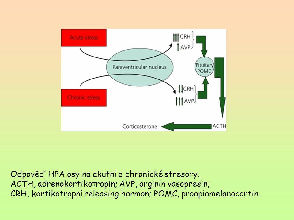 Odpověď HPA osy na akutní a chronické stresory. ACTH, adrenokortikotropin; AVP, arginin vasopresin; CRH, kortikotropní releasing hormon; POMC, proopio