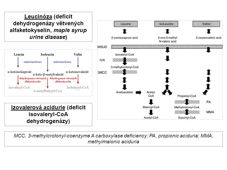 MCC, 3-methylcrotonyl-coenzyme A carboxylase deficiency; PA, propionic aciduria; MMA, methylmalonic aciduria Leucinóza (deficit dehydrogenázy větvenýc