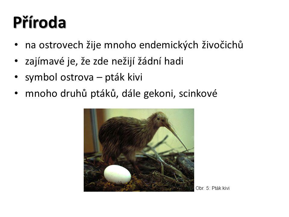 Obr. 6: Scink Obr. 7: Gekon Obr. 8: Papoušek Nestor Kea Obr. 9: Hatérie novozélandská